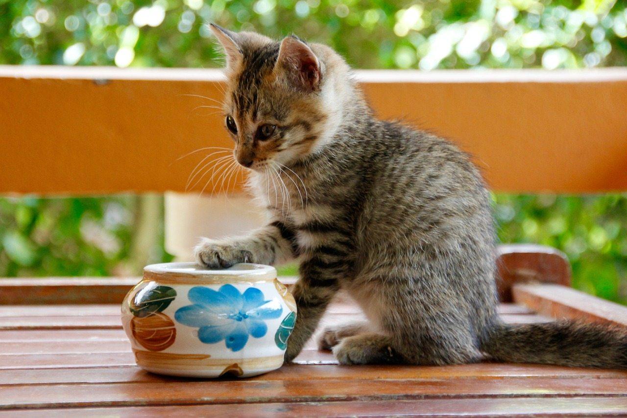 pomysł nabiznes kocia kawiarnia
